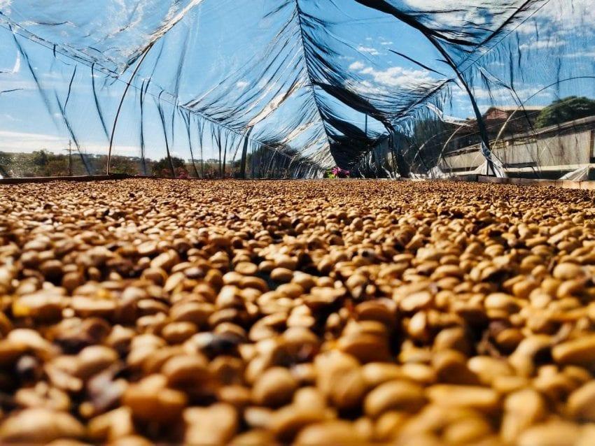 cafe-kho-tren-san-phoi-lon-o-fazenda-capricornio-brazil